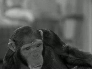 Tarzans নতুন york adventure (1942)